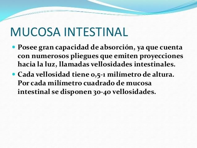 INTESTINO GRUESO  Tiene una longitud de 1,5 metros y es la porción final del sistema digestivo. Está separado del intesti...