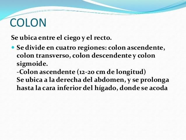 SISTEMA DIGESTIVO Y ABSORCION DE NUTRIENTES