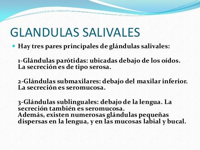 FUNCIONES DE LAS GLANDULAS SALIVALES  SALIVA Es un líquido transparente de viscosidad variable segregado por las glándula...