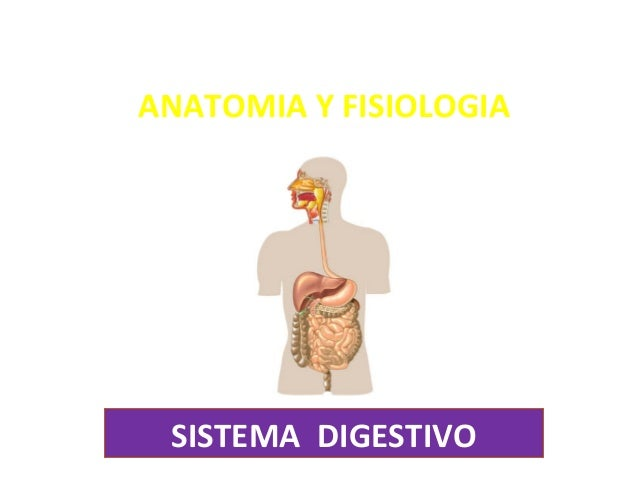 sistema-digestivo-1-638.jpg?cb=1471987933