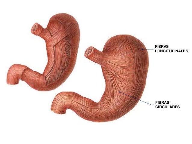 Sistema digestivo y urogenitales