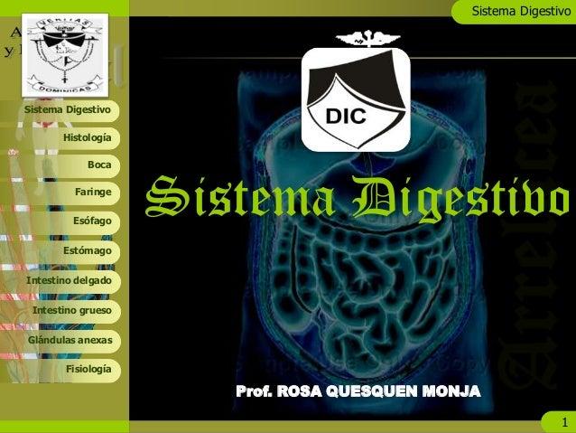 Sistema Digestivo 1 Boca Faringe Esófago Estómago Histología Sistema Digestivo Intestino delgado Intestino grueso Glándula...