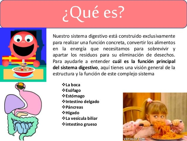 Sistema digestivo, hígado y páncreas.