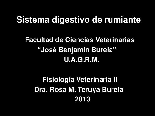 Sistema digestivo de rumiante