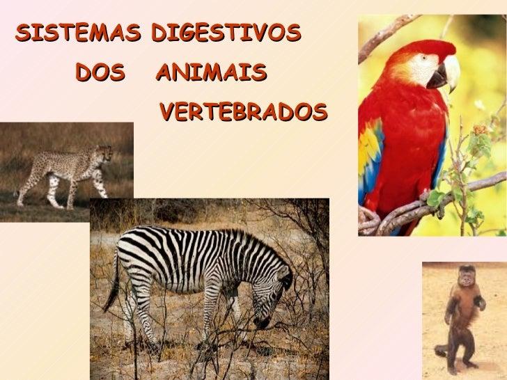 SISTEMAS DIGESTIVOS DOS ANIMAIS VERTEBRADOS