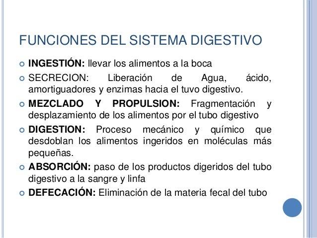 Sistema digestivo (Generalidades)