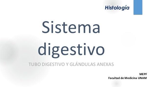 Sistema digestivo TUBO DIGESTIVO Y GLÁNDULAS ANEXAS Histología MEPF Facultad de Medicina UNAM