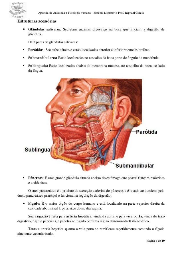 Lujo Anatomía De La Boca Humana Galería - Imágenes de Anatomía ...