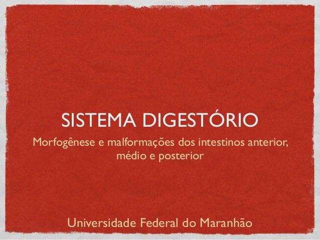 SISTEMA DIGESTÓRIO Morfogênese e malformações dos intestinos anterior, médio e posterior Universidade Federal do Maranhão