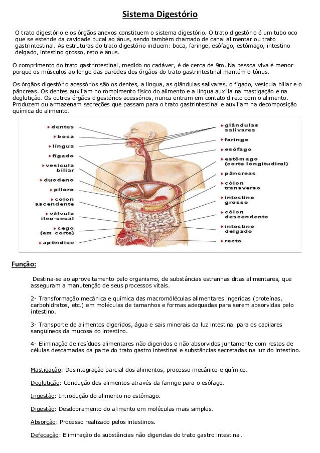 Sistema Digestório O trato digestório e os órgãos anexos constituem o sistema digestório. O trato digestório é um tubo oco...
