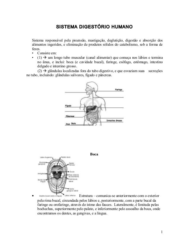 SISTEMA DIGESTÓRIO HUMANO Sistema responsável pela preensão, mastigação, deglutição, digestão e absorção dos alimentos ing...