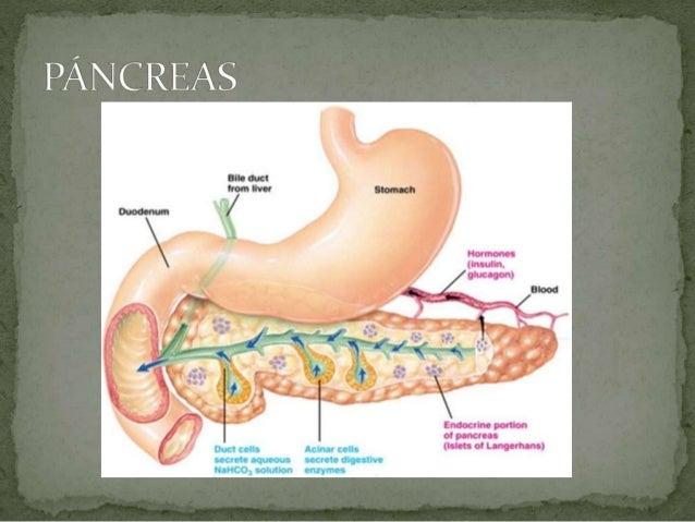 Sistema endócrino pancreas