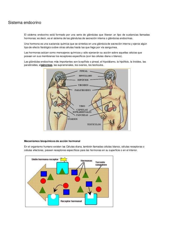 Sistema endocrino<br />El sistema endocrino está formado por una serie de glándulas que liberan un tipo de sustancias llam...