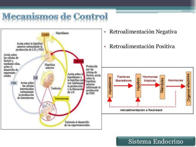 Sistema Endocrino Anatomía Microscópica II (Histología)