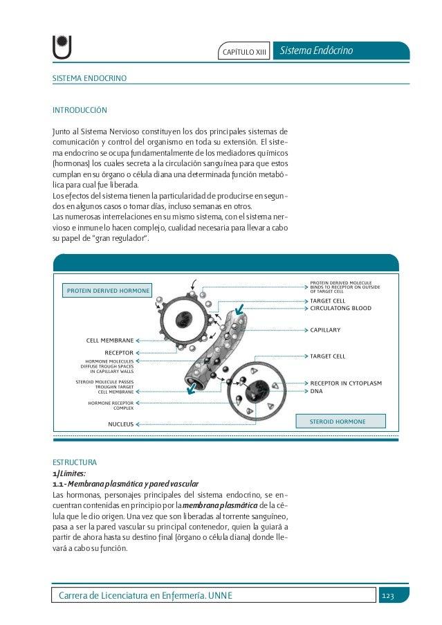 sistema-endocrino-1-638.jpg?cb=1456714766