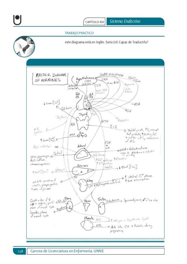 sistema-endocrino-16-638.jpg?cb=1456714766