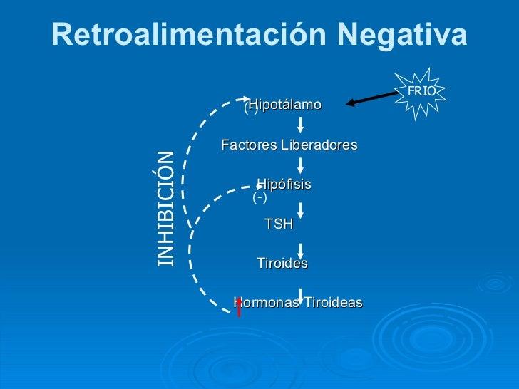 Breve guía de metabolismo aminoacidos