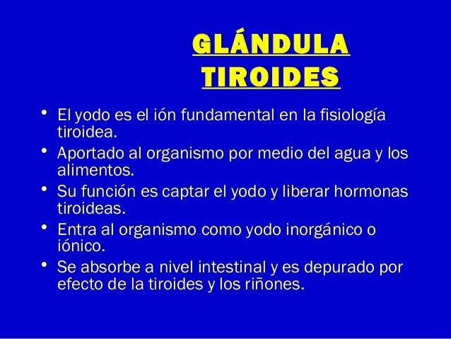 GLÁNDULATIROIDES• El yodo es el ión fundamental en la fisiologíatiroidea.• Aportado al organismo por medio del agua y losa...