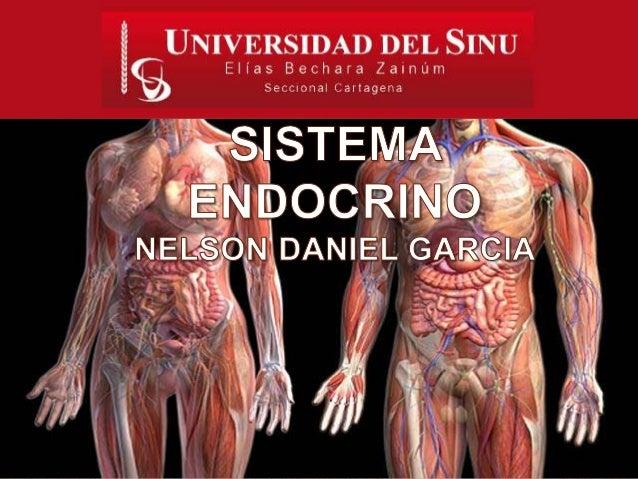 Conjunto de  órganos y tejidos  que liberan  hormonas.