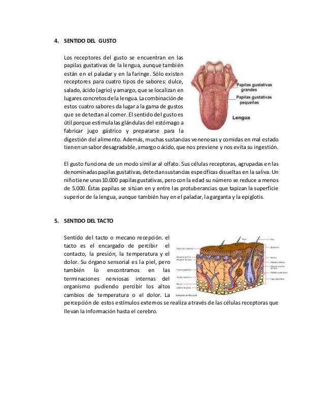 Sistema endocrino o glandular