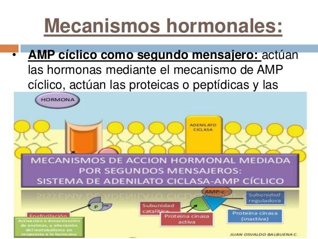 hormonas aminas proteicas y esteroides