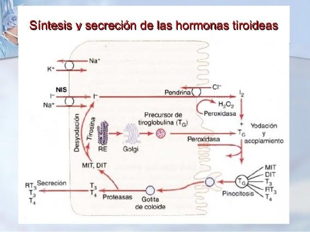 steroid hormone diagram