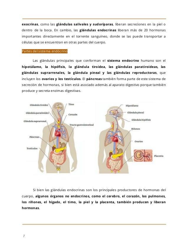 Sistema endocrino y aparato genital