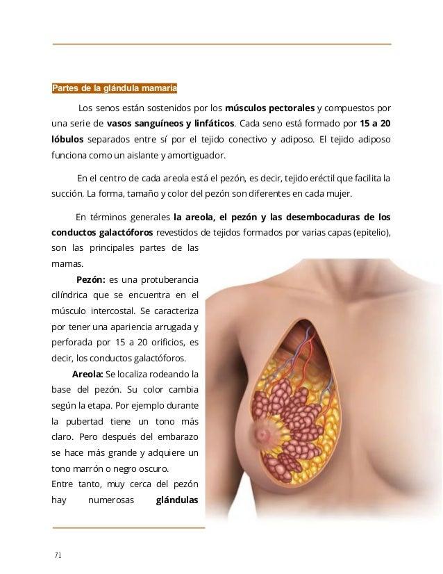 Dorable Partes Del Sistema Endocrino Embellecimiento - Imágenes de ...
