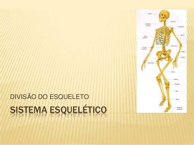 DIVISÃO DO ESQUELETOSISTEMA ESQUELÉTICO