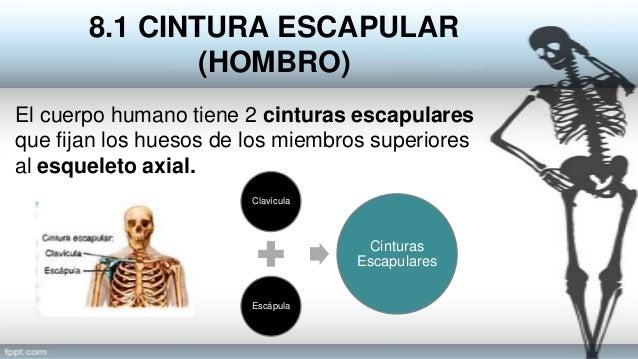 Sistema esquelético: Esqueleto Apendicular Cap 8