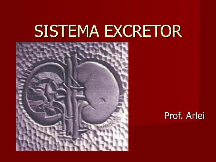 SISTEMA EXCRETOR Prof. Arlei