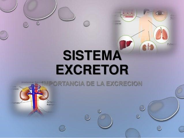 SISTEMA  EXCRETOR  IMPORTANCIA DE LA EXCRECION