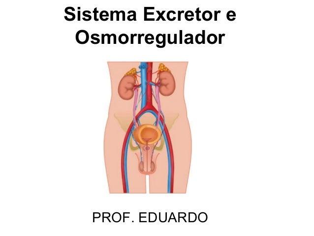 Sistema Excretor eOsmorreguladorPROF. EDUARDO