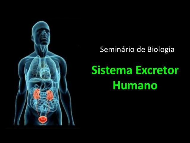 Sistema Excretor Humano Seminário de Biologia