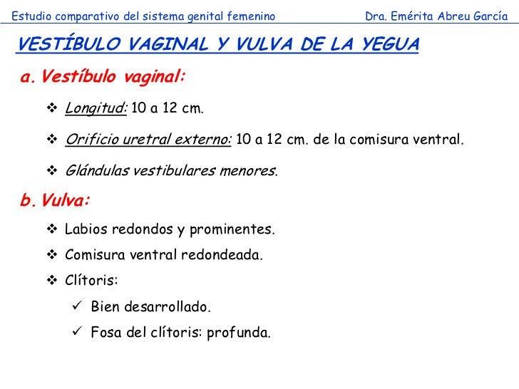 Estudio comparativo del sistema genital femenino      Dra. Emérita Abreu GarcíaVESTÍBULO VAGINAL Y VULVA DE LA YEGUA a. Ve...
