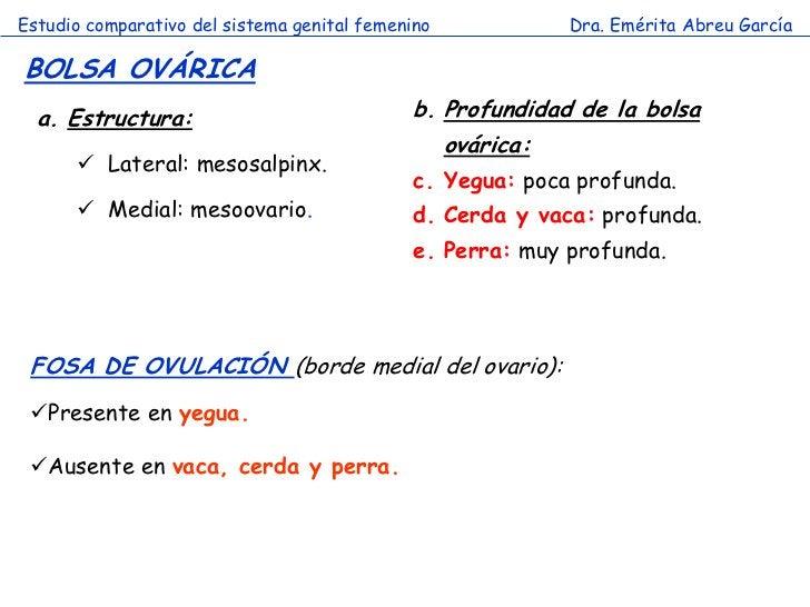 Estudio comparativo del sistema genital femenino            Dra. Emérita Abreu GarcíaBOLSA OVÁRICA  a. Estructura:        ...