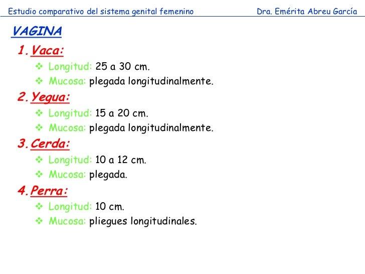Estudio comparativo del sistema genital femenino   Dra. Emérita Abreu GarcíaVAGINA 1.Vaca:       Longitud: 25 a 30 cm.   ...