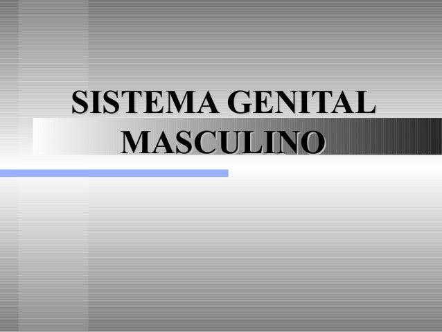 SISTEMA GENITALSISTEMA GENITAL MASCULINOMASCULINO