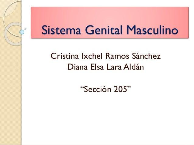 """Sistema Genital Masculino Cristina Ixchel Ramos Sánchez Diana Elsa Lara Aldán """"Sección 205"""""""