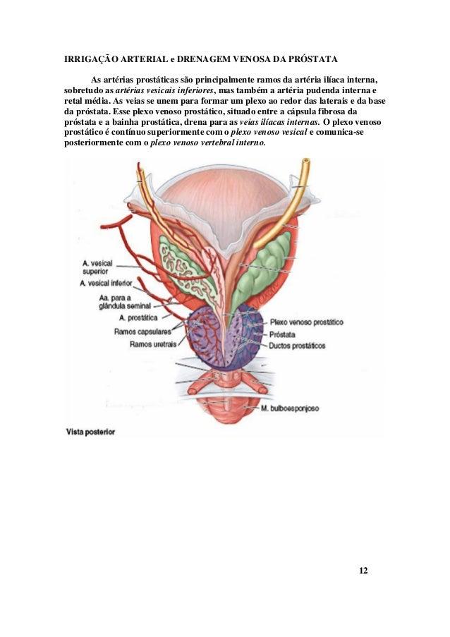 Fein Anatomie Der A. Iliaca Interna Fotos - Menschliche Anatomie ...