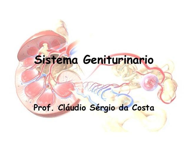 Sistema Geniturinario  Prof. Cláudio Sérgio da Costa