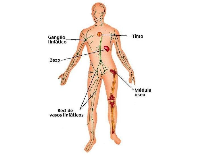 cuerpo humano - Mapa Mental