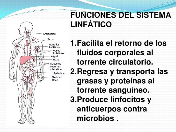 Sistema inmunológico linfático