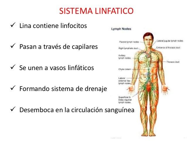sistema-linfatico-3-638.jpg?cb=1351083861