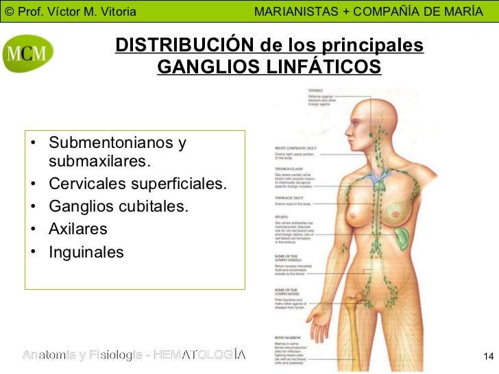 Famoso Ubicación De Los Ganglios Linfáticos En El Cuerpo Humano ...