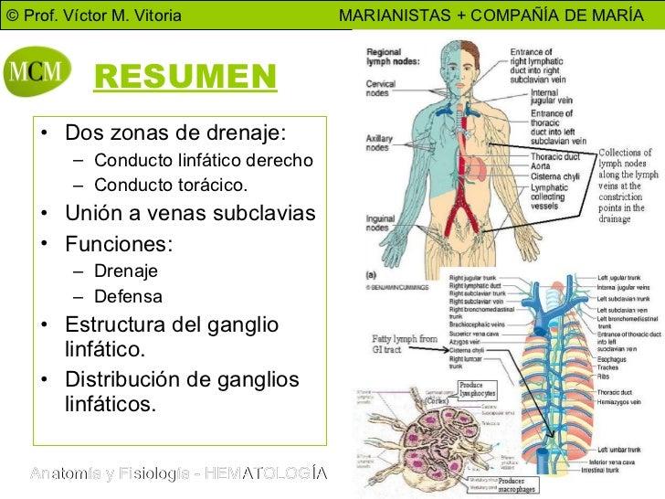 Excepcional Conducto Linfático Embellecimiento - Anatomía de Las ...