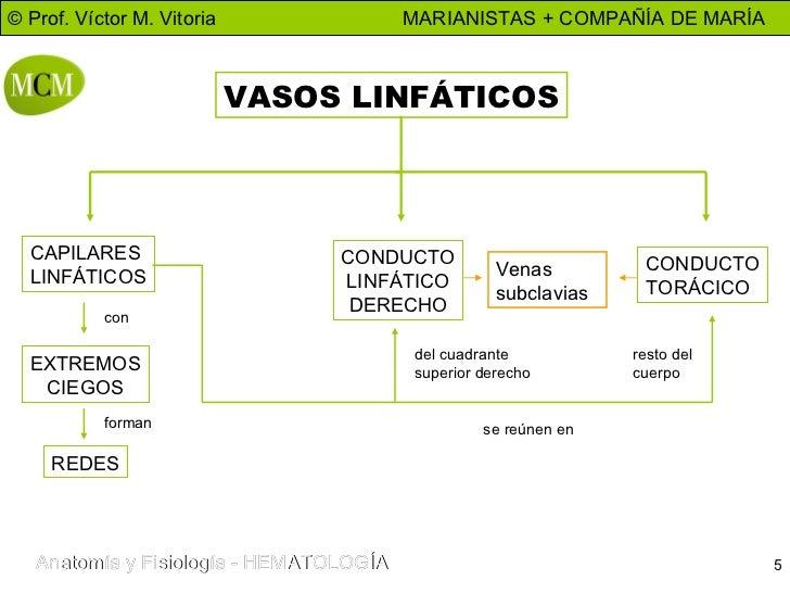 Hermosa Mapa Del Sistema Linfático Ornamento - Anatomía de Las ...