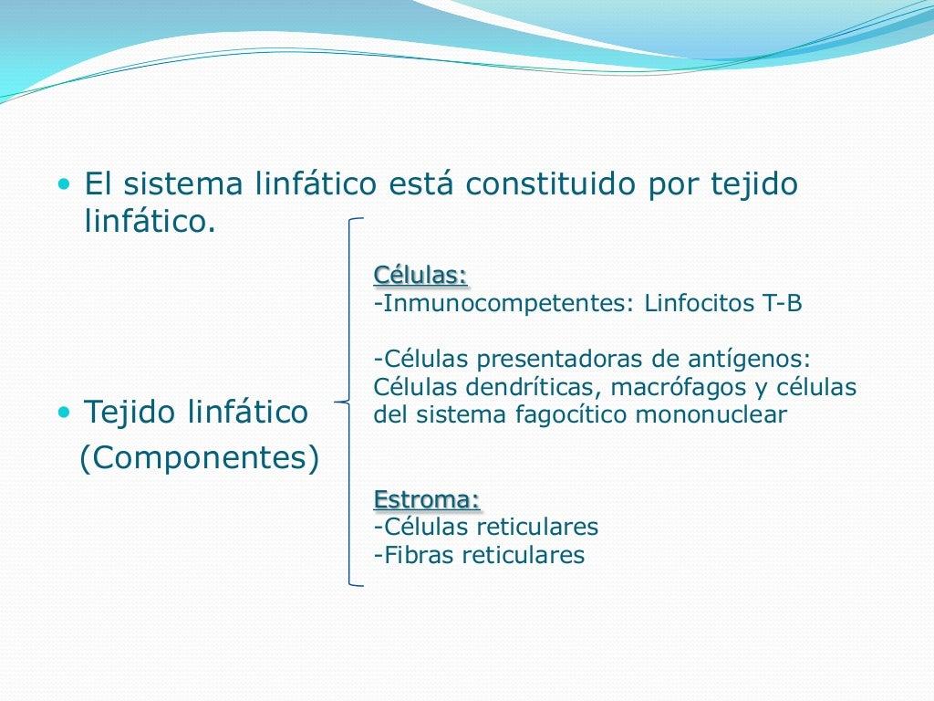 Histologia del Sistema linfático