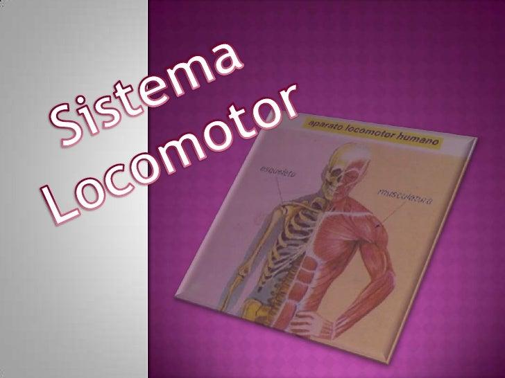 Es el sistema que consta o se constituye de loshuesos, articulaciones y los músculos.Es el sistema que para mantener una...