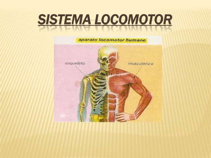 SISTEMA LOCOMOTOR      s